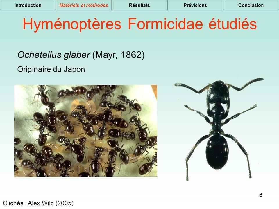 6 IntroductionMatériels et méthodesRésultatsPrévisionsConclusion Hyménoptères Formicidae étudiés Ochetellus glaber (Mayr, 1862) Originaire du Japon Cl