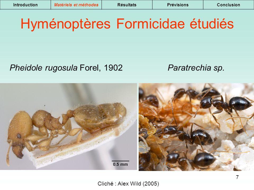 7 IntroductionMatériels et méthodesRésultatsPrévisionsConclusion Pheidole rugosula Forel, 1902 Hyménoptères Formicidae étudiés Cliché : Alex Wild (200