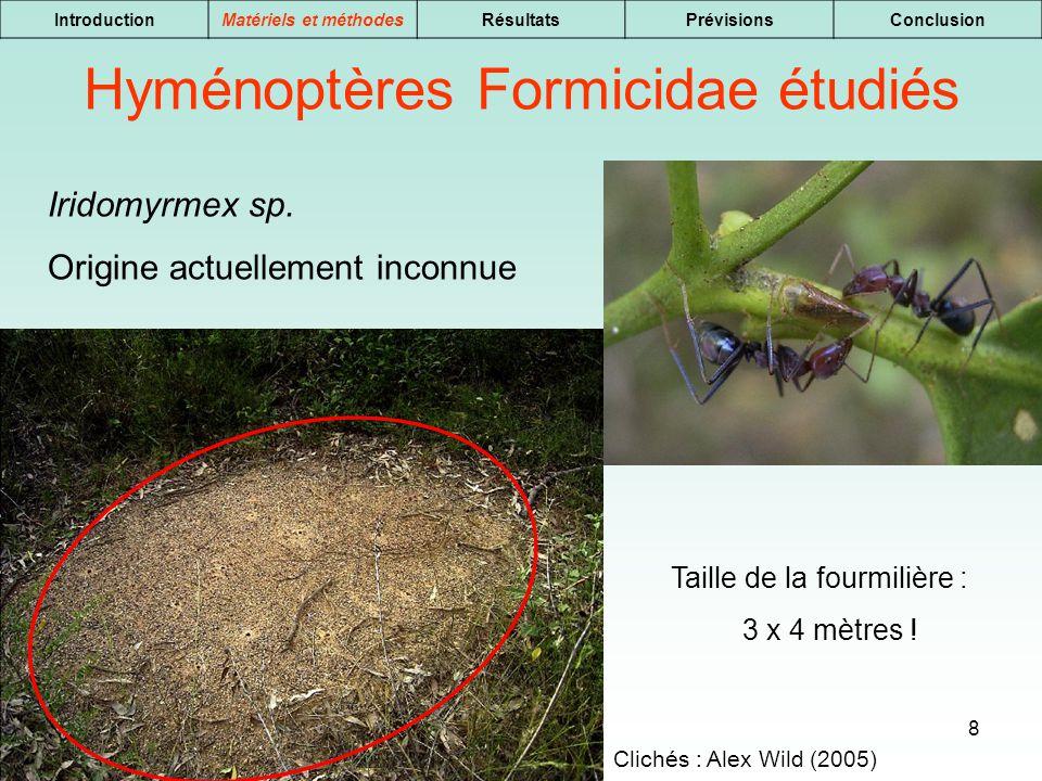 8 IntroductionMatériels et méthodesRésultatsPrévisionsConclusion Iridomyrmex sp. Origine actuellement inconnue Hyménoptères Formicidae étudiés Clichés