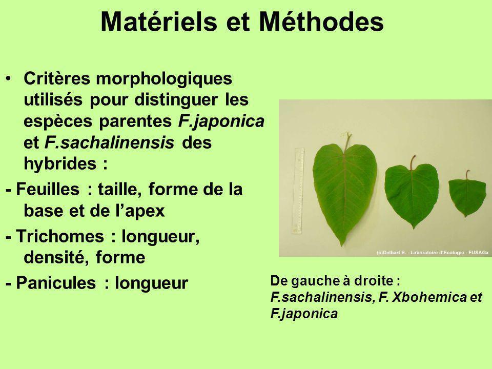 Matériels et Méthodes Critères morphologiques utilisés pour distinguer les espèces parentes F.japonica et F.sachalinensis des hybrides : - Feuilles :