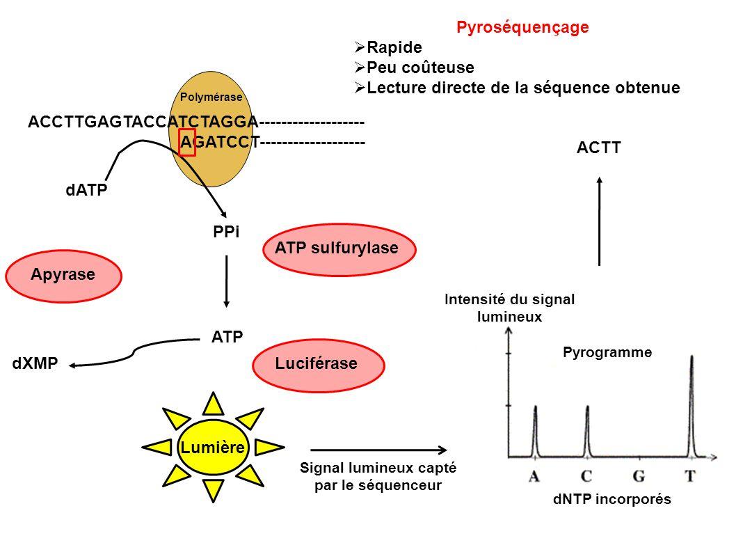 Polymérase ACCTTGAGTACCATCTAGGA------------------- AGATCCT------------------- dXMP dATP PPi ATP ApyraseATP sulfurylaseLuciférase Lumière Pyrogramme In