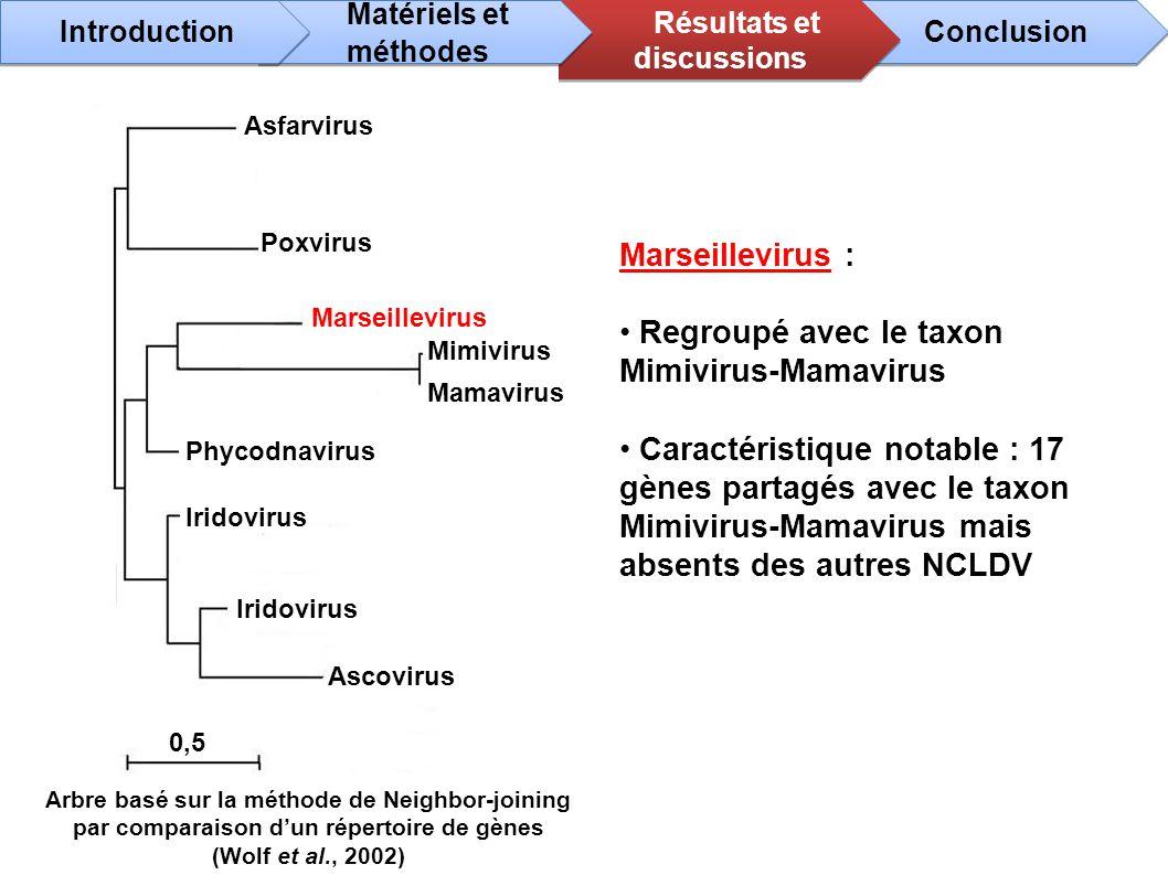 Marseillevirus : Regroupé avec le taxon Mimivirus-Mamavirus Caractéristique notable : 17 gènes partagés avec le taxon Mimivirus-Mamavirus mais absents