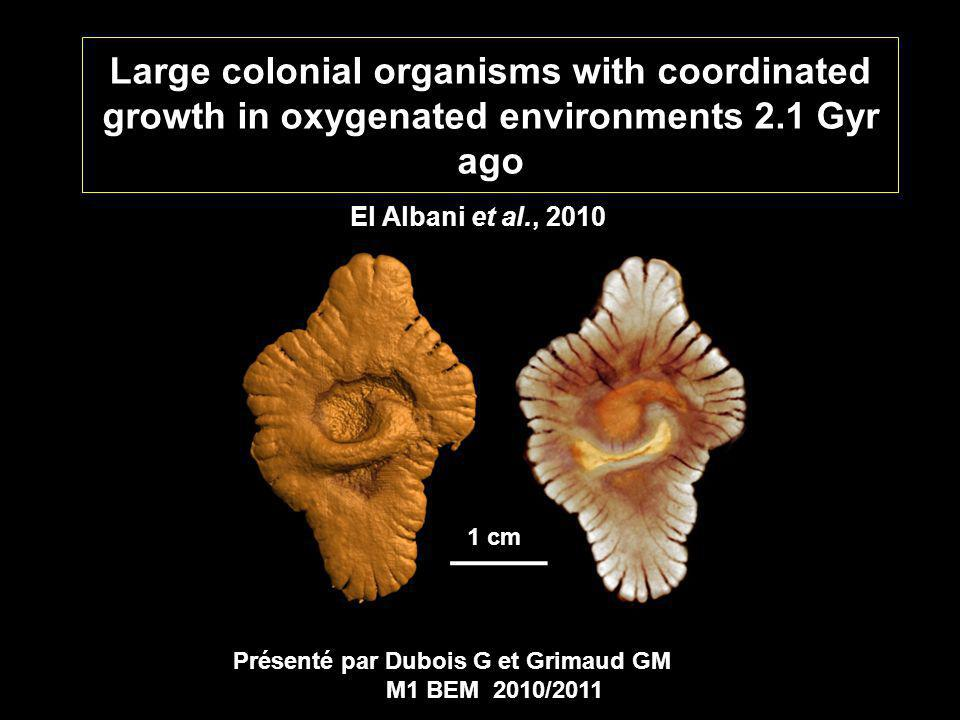 Large colonial organisms with coordinated growth in oxygenated environments 2.1 Gyr ago El Albani et al., 2010 Présenté par Dubois G et Grimaud GM M1