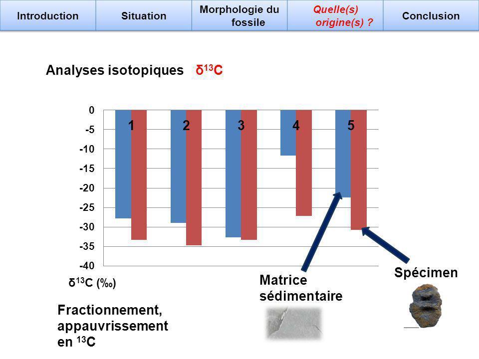Analyses isotopiques δ 13 C () δ 13 C Matrice sédimentaire Spécimen Fractionnement, appauvrissement en 13 C