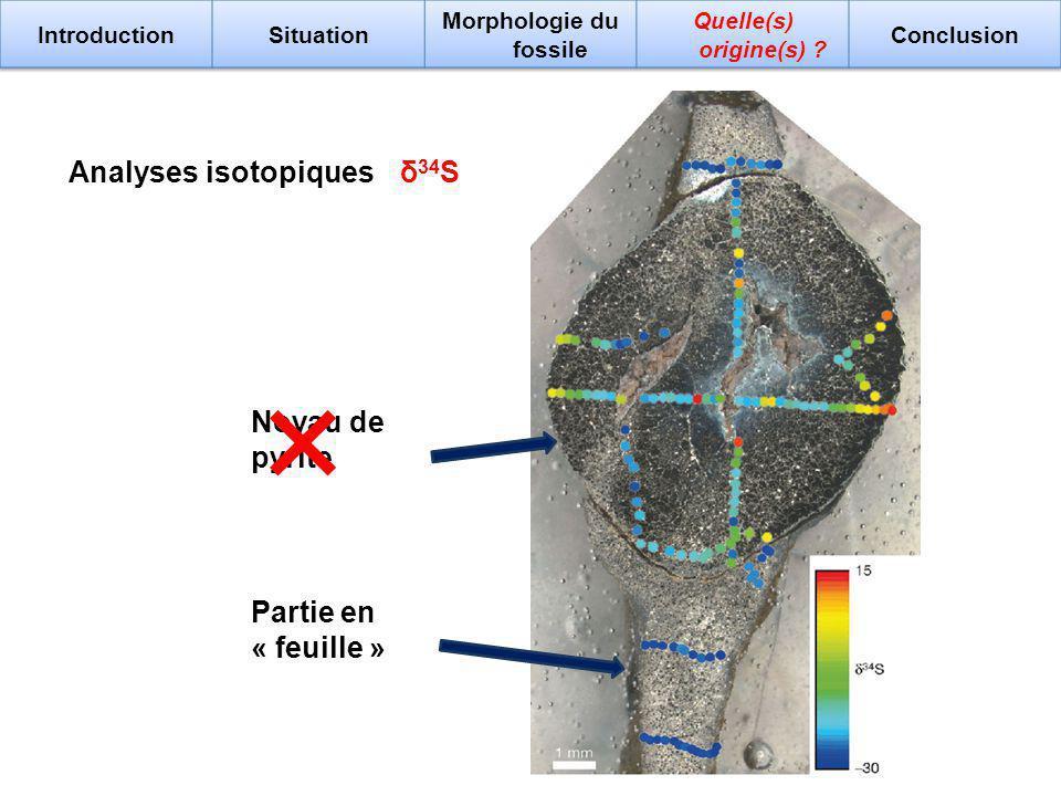 δ 34 SAnalyses isotopiques Noyau de pyrite Partie en « feuille »