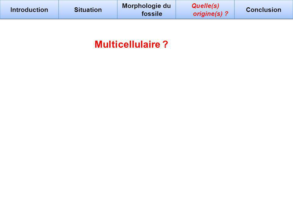 Multicellulaire ?
