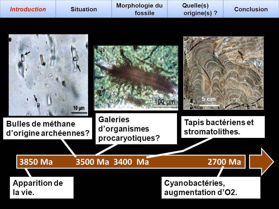 Grypania spiralis 2,6 Ga : Stéranes détectés dans des graphites du Groenland.