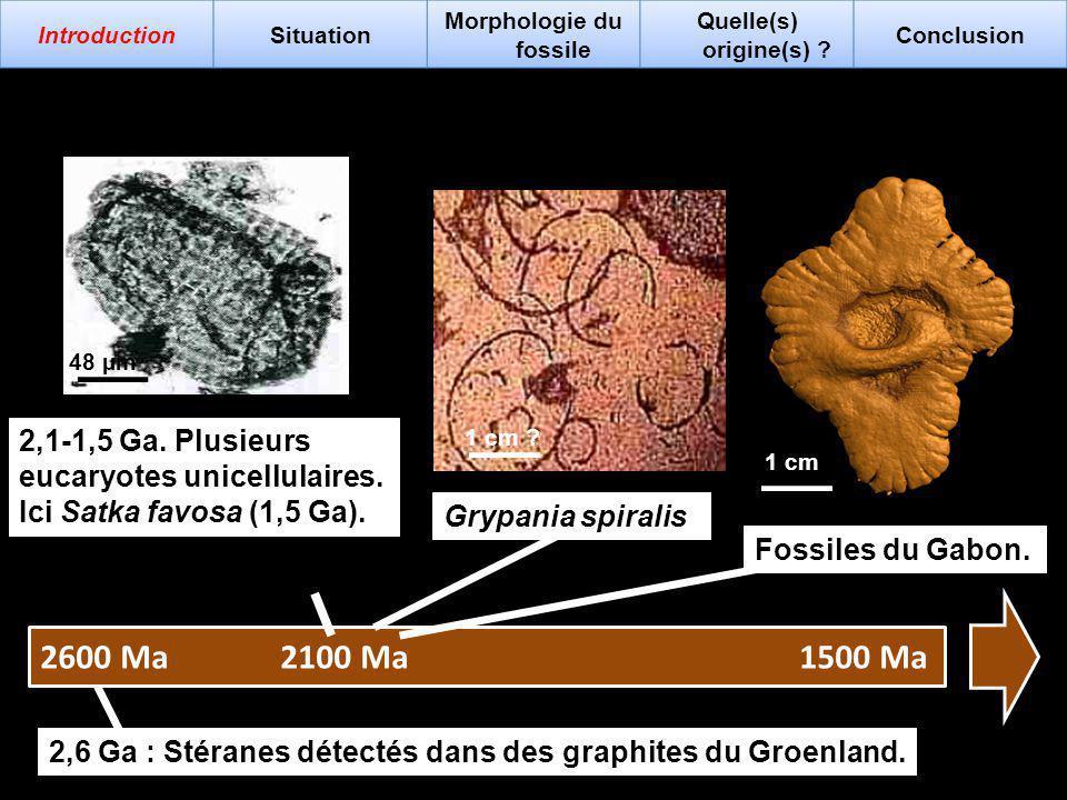 Grypania spiralis 2,6 Ga : Stéranes détectés dans des graphites du Groenland. 2,1-1,5 Ga. Plusieurs eucaryotes unicellulaires. Ici Satka favosa (1,5 G