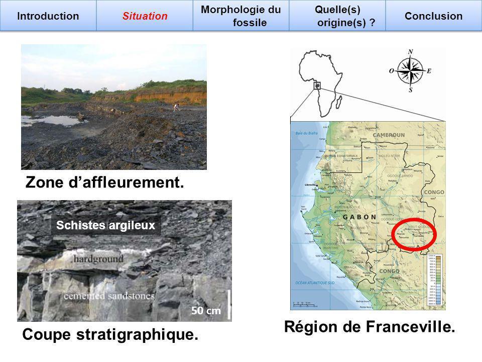 120 km Marnes noires Zone daffleurement. 50 cm Coupe stratigraphique. Région de Franceville. Schistes argileux