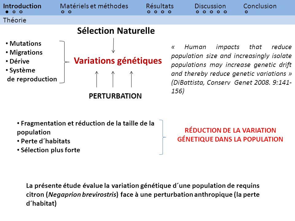 Théorie IntroductionMatériels et méthodesRésultatsDiscussionConclusion Variations génétiques Sélection Naturelle Mutations Migrations Dérive Système d