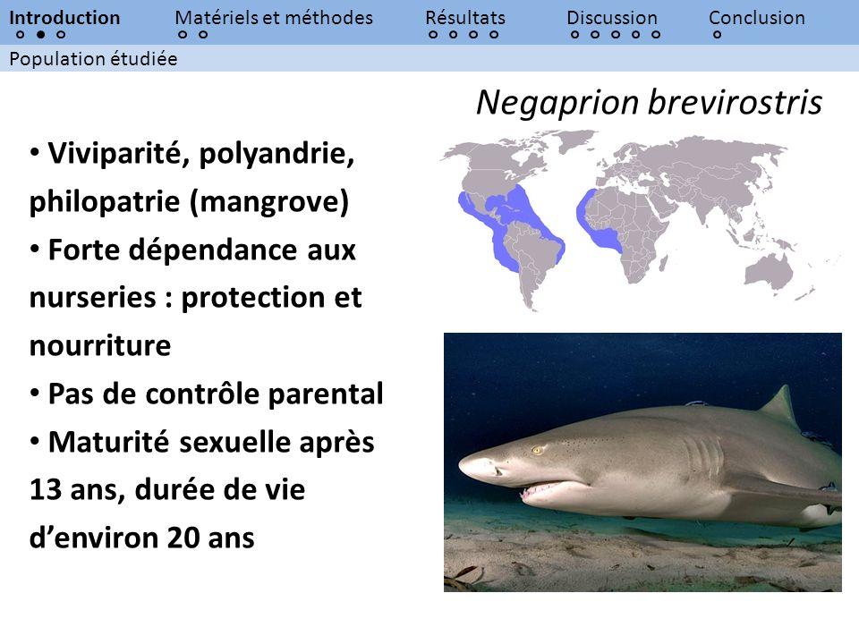 Population étudiée IntroductionMatériels et méthodesRésultatsDiscussionConclusion Negaprion brevirostris Viviparité, polyandrie, philopatrie (mangrove