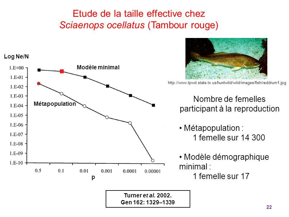22 Nombre de femelles participant à la reproduction Métapopulation : 1 femelle sur 14 300 Modèle démographique minimal : 1 femelle sur 17 Etude de la