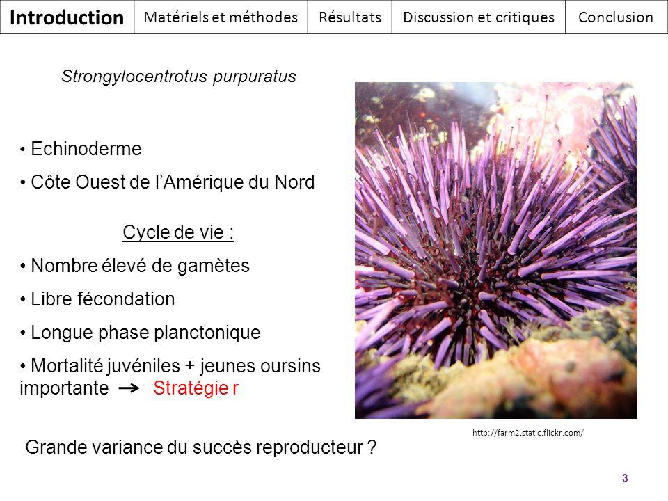 3 Strongylocentrotus purpuratus Echinoderme Côte Ouest de lAmérique du Nord Cycle de vie : Nombre élevé de gamètes Libre fécondation Longue phase plan