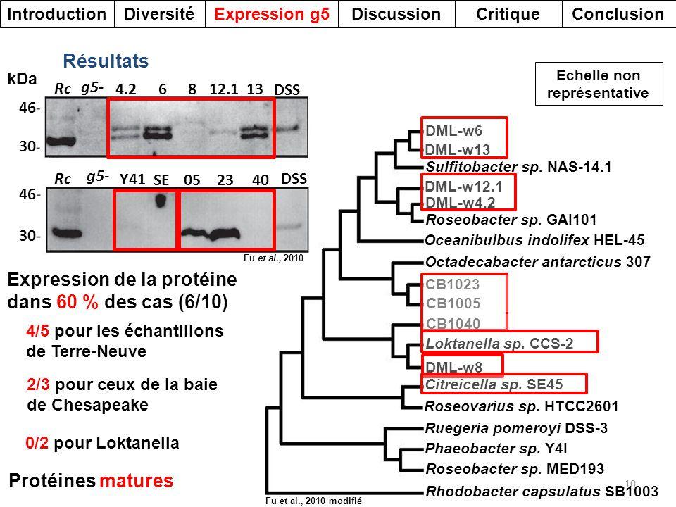 DML-w6 DML-w13 DML-w12.1 DML-w4.2 DML-w8 Sulfitobacter sp. NAS-14.1 Roseobacter sp. GAI101 Oceanibulbus indolifex HEL-45 Octadecabacter antarcticus 30