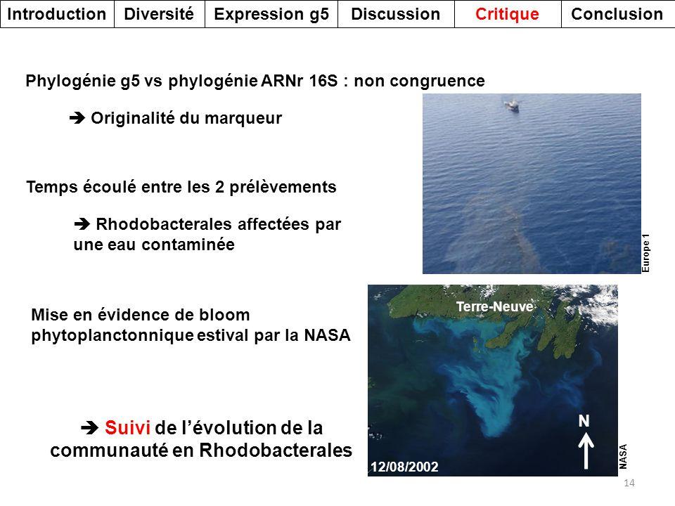 DiversitéDiscussionExpression g5Introduction 14 Phylogénie g5 vs phylogénie ARNr 16S : non congruence Temps écoulé entre les 2 prélèvements Mise en év