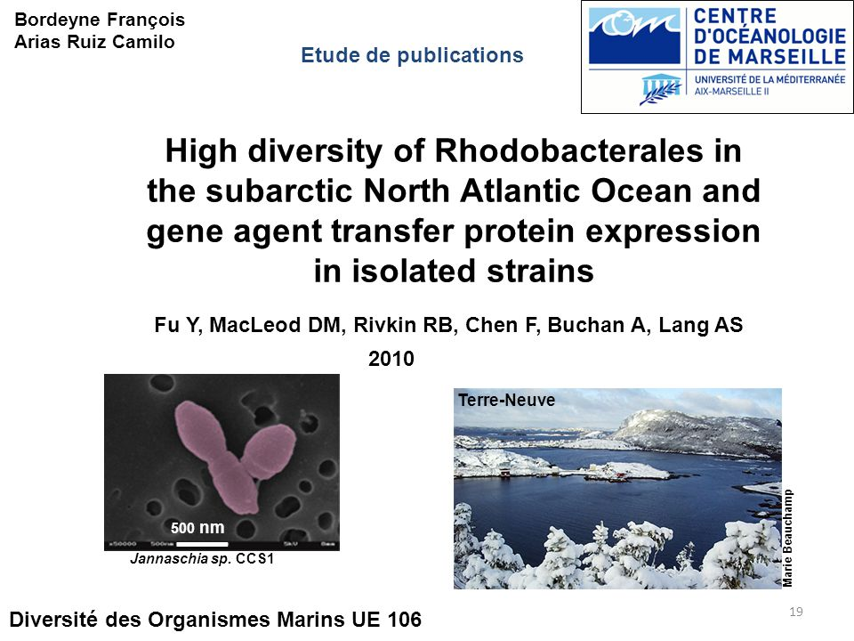 19 High diversity of Rhodobacterales in the subarctic North Atlantic Ocean and gene agent transfer protein expression in isolated strains Diversité des Organismes Marins UE 106 Bordeyne François Arias Ruiz Camilo Etude de publications Marie Beauchamp Fu Y, MacLeod DM, Rivkin RB, Chen F, Buchan A, Lang AS 2010 500 nm Jannaschia sp.