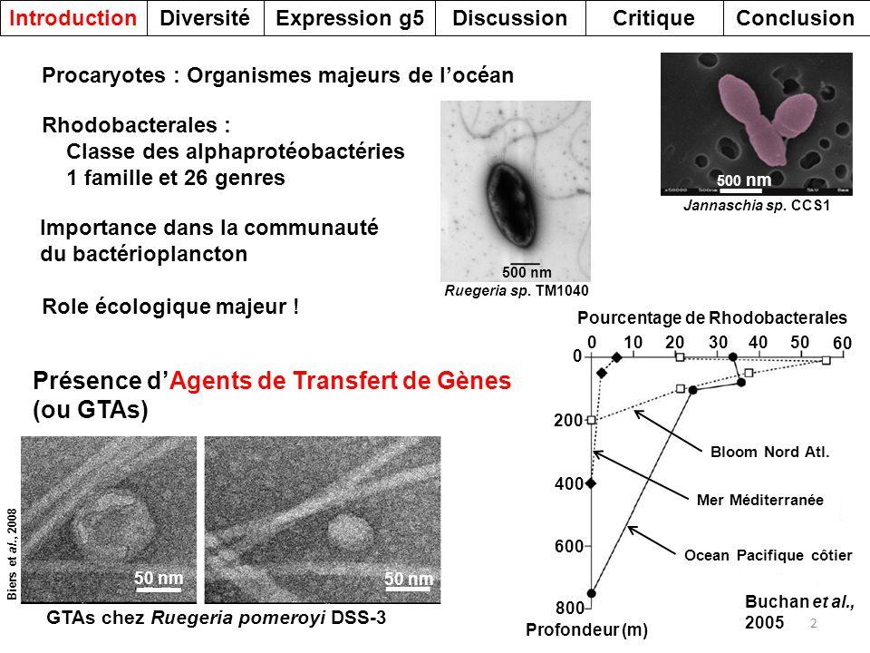 13 DiversitéDiscussionExpression g5IntroductionCritiqueConclusion GLRGLSLEGKALNSAVAAEG GLRGLELEGKAMSTAVAGDG GLRGLVLEGKALSTAVAGDG ALRGLELEGKSLSSAVAADG ALRGLTLEGKAMSTAINSDG GLRGLELDSKSMSTAVNSDG Rhodobacter capsulatus SB1003 Oceanibulbus indolifex HEL-45 Phaeobacter sp.