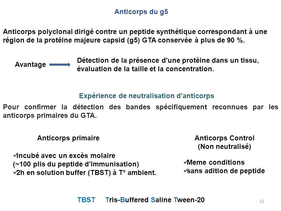 22 Expérience de neutralisation d'anticorps TBST Tris-Buffered Saline Tween-20 Anticorps primaire Incubé avec un excès molaire (~100 plis du peptide d