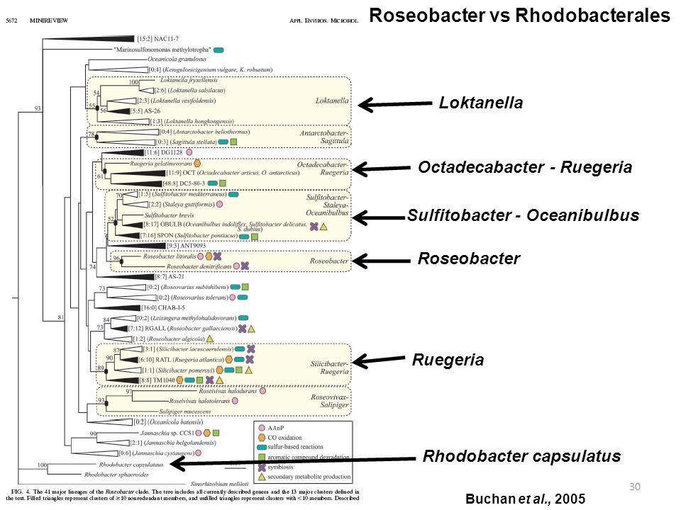 30 Roseobacter vs Rhodobacterales Loktanella Octadecabacter - Ruegeria Sulfitobacter - Oceanibulbus Roseobacter Ruegeria Rhodobacter capsulatus Buchan