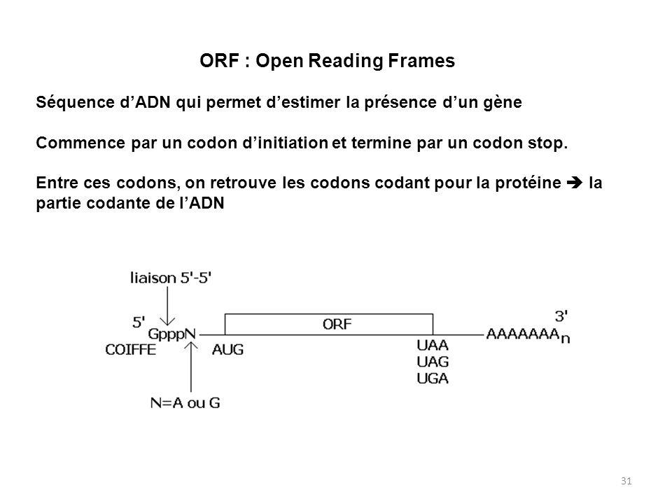 31 ORF : Open Reading Frames Séquence dADN qui permet destimer la présence dun gène Commence par un codon dinitiation et termine par un codon stop. En