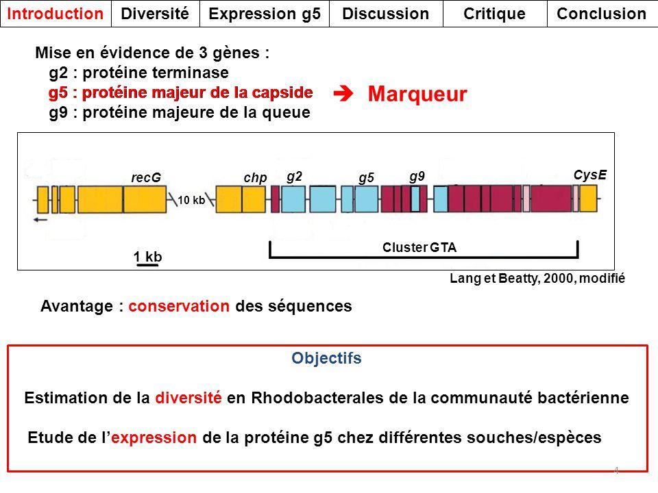 Avantage : conservation des séquences Marqueur Objectifs Estimation de la diversité en Rhodobacterales de la communauté bactérienne Etude de lexpressi