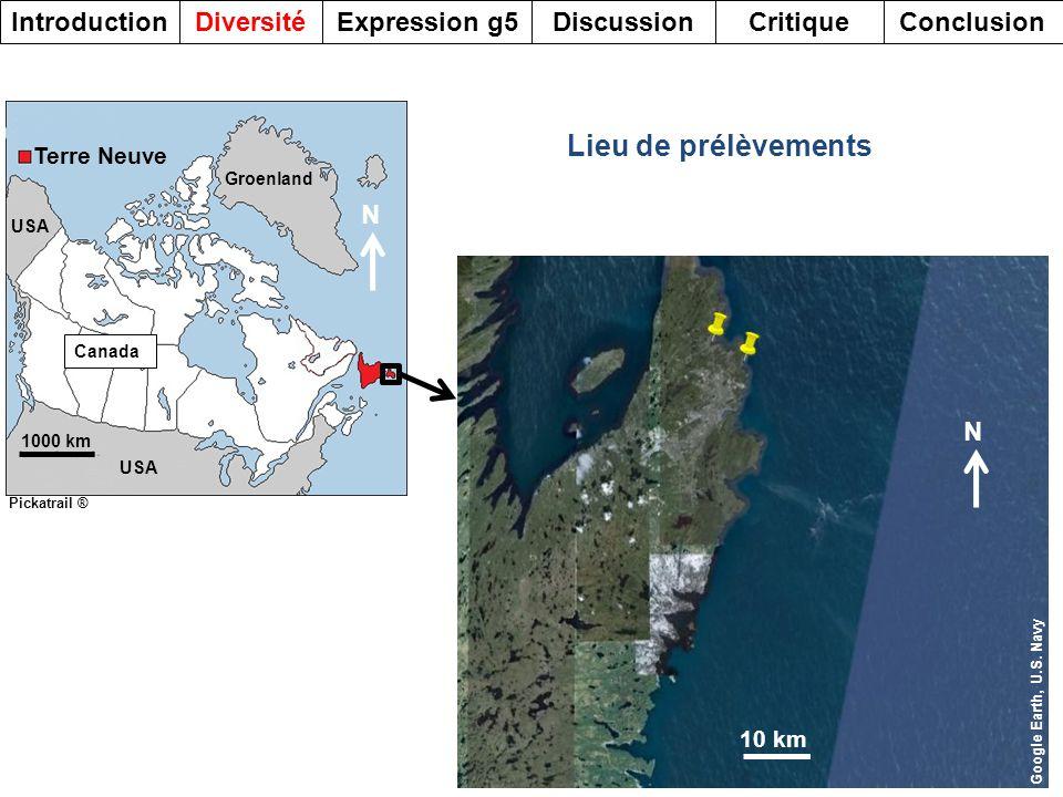 1000 km USA Groenland Canada Terre Neuve Pickatrail ® Lieu de prélèvements DiversitéDiscussionExpression g5Introduction 5 CritiqueConclusion 10 km Goo