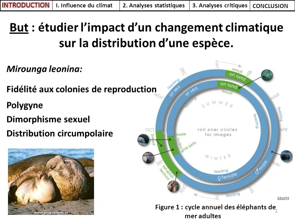 Figure 1 : cycle annuel des éléphants de mer adultes But : étudier limpact dun changement climatique sur la distribution dune espèce. Mirounga leonina