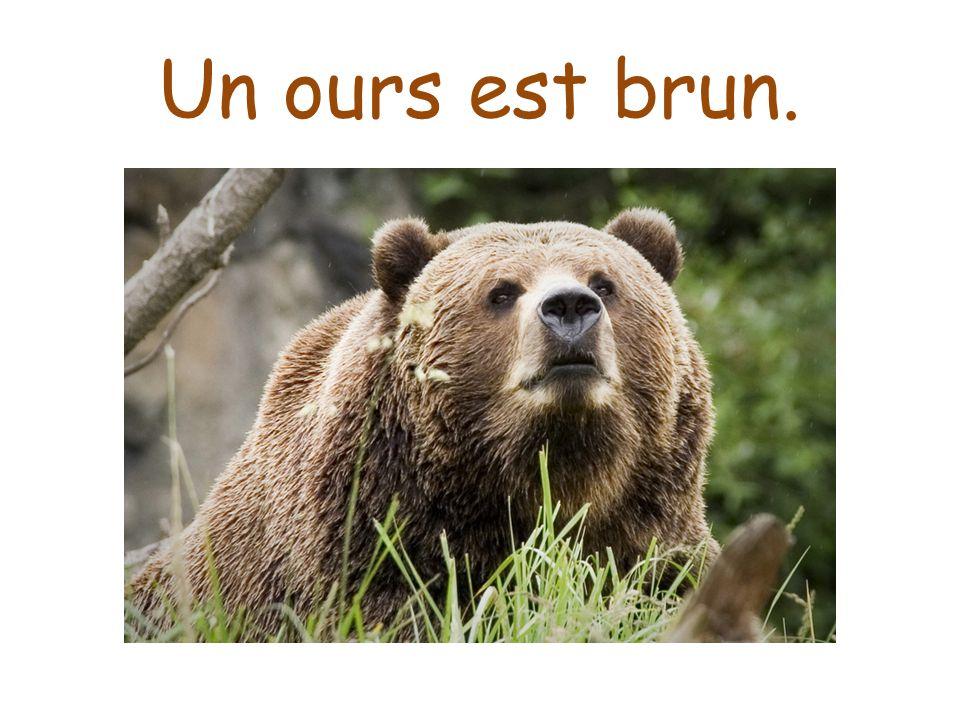 Un ours est brun.