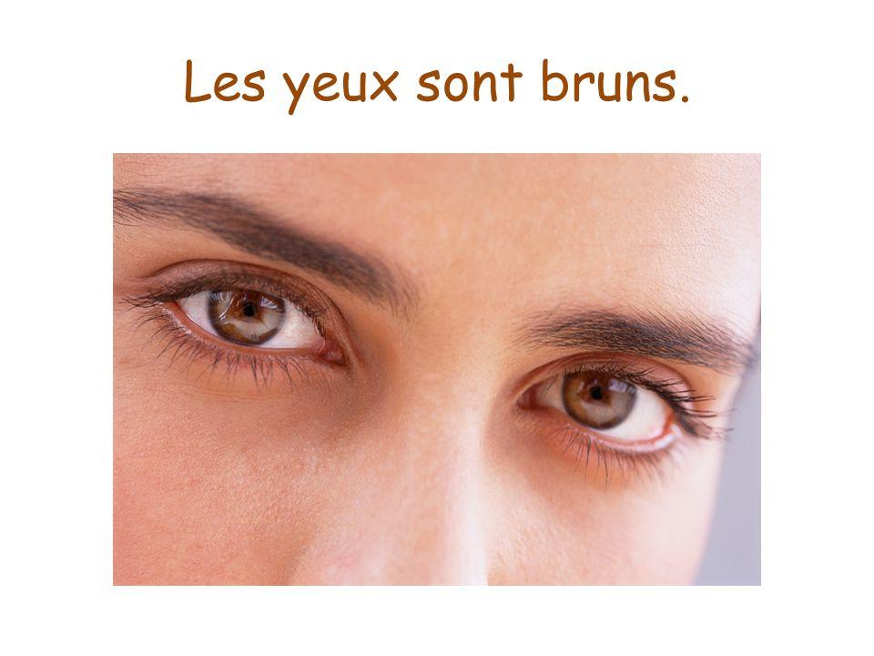 Les yeux sont bruns.
