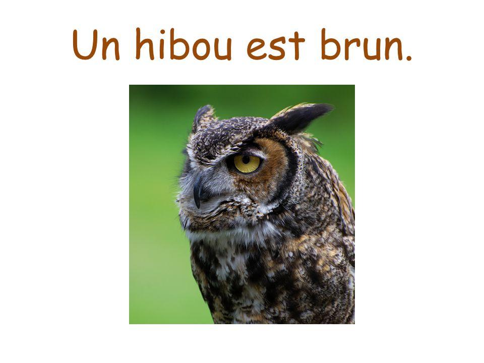 Un hibou est brun.