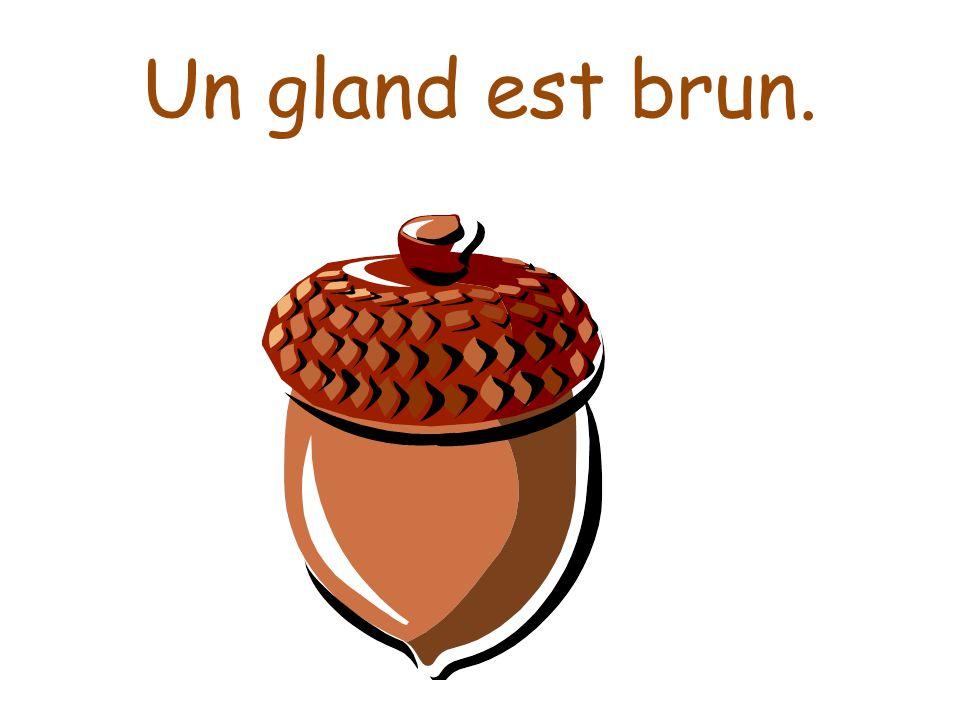 Un gland est brun.