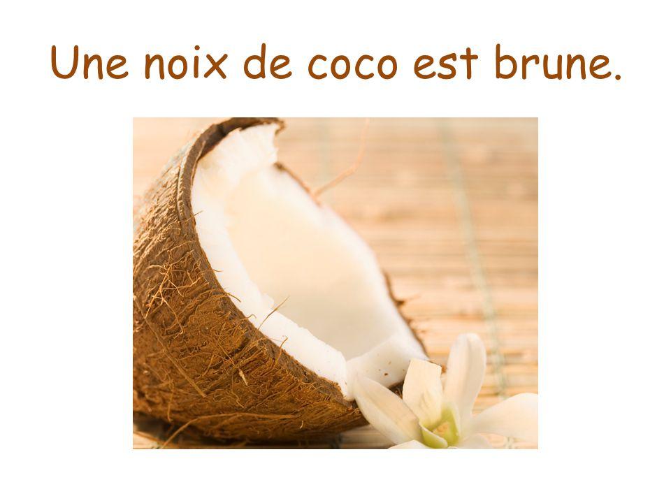 Une noix de coco est brune.