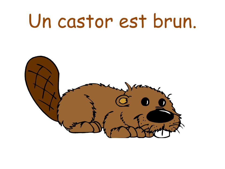 Un castor est brun.
