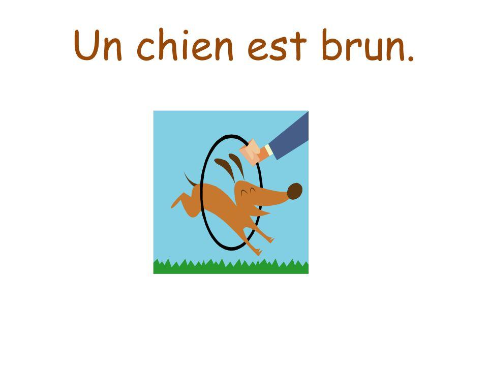 Un chien est brun.