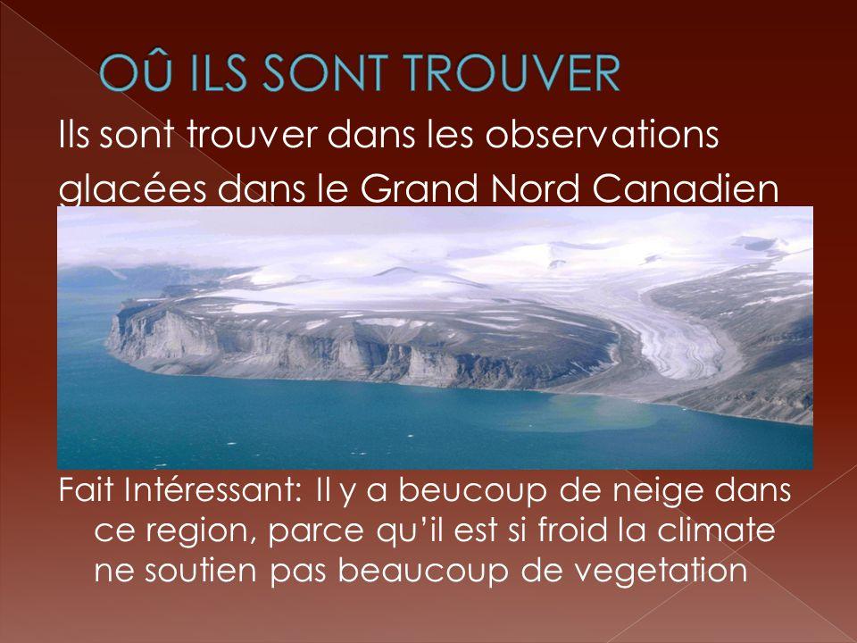 Ils sont trouver dans les observations glacées dans le Grand Nord Canadien Fait Intéressant: Il y a beucoup de neige dans ce region, parce quil est si froid la climate ne soutien pas beaucoup de vegetation