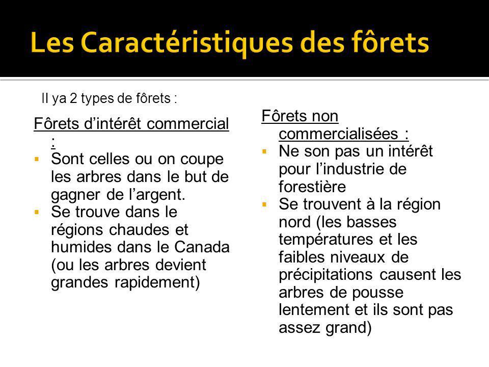Fôrets dintérêt commercial : Sont celles ou on coupe les arbres dans le but de gagner de largent. Se trouve dans le régions chaudes et humides dans le