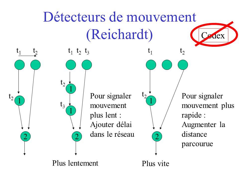 Détecteurs de mouvement (Reichardt) 1 2 1 2 1 Plus lentement 1 2 Plus vite Codex t1t1 t2t2 t2t2 t1t1 t3t3 Pour signaler mouvement plus lent : Ajouter délai dans le réseau t2t2 t2t2 t3t3 t1t1 t2t2 Pour signaler mouvement plus rapide : Augmenter la distance parcourue t2t2