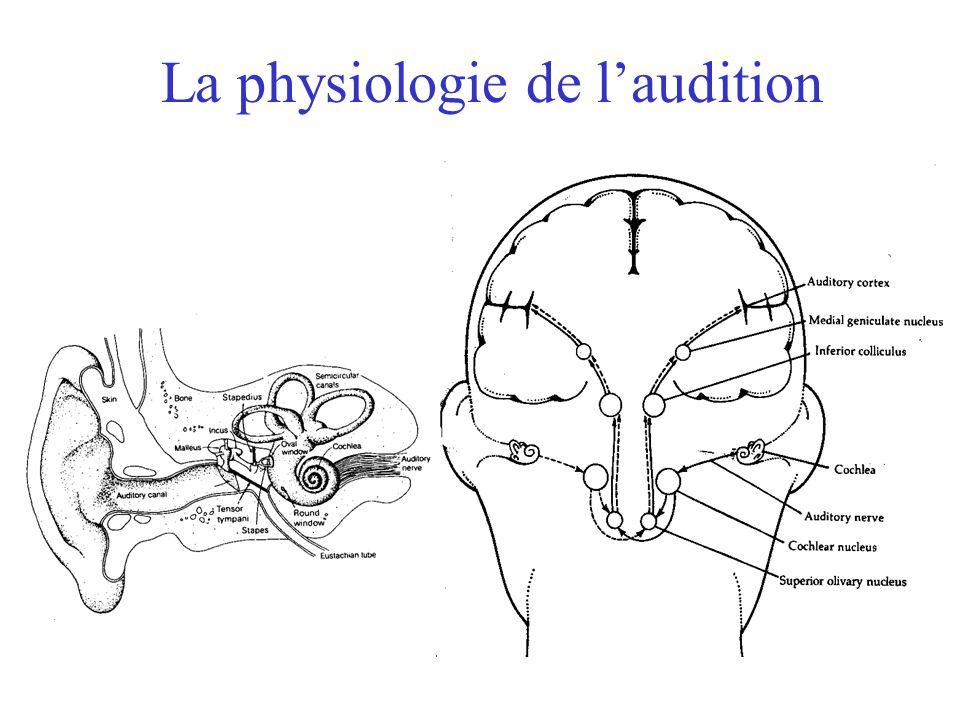 Plan du cours Retour et conclusion du cours de la semaine dernière –Anatomie et physiologie de laudition (oreille et cochlée) –Analyses dans la cochlé