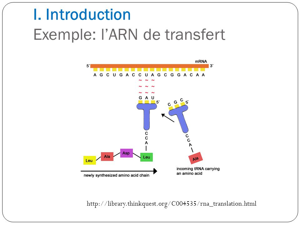 I. Introduction Exemple: lARN de transfert http://library.thinkquest.org/C004535/rna_translation.html