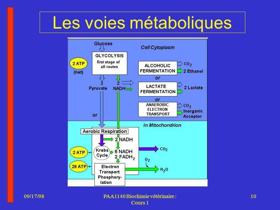 09/17/9810PAA1140 Biochimie vétérinaire : Cours 1 Les voies métaboliques