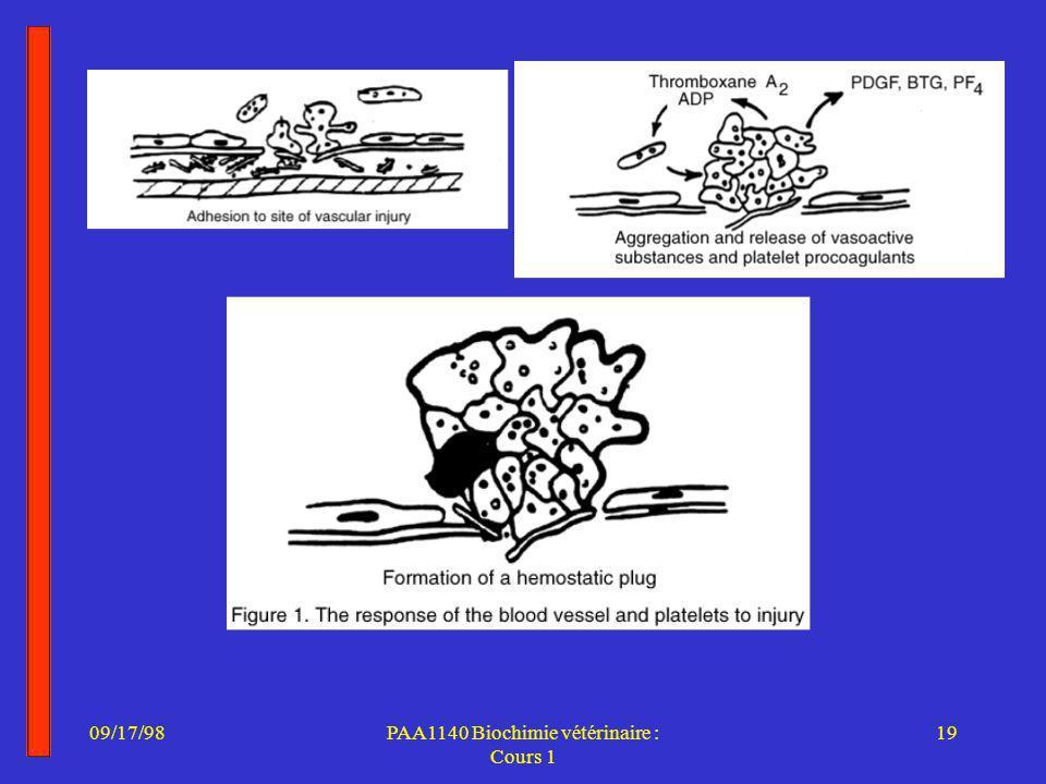 09/17/9819PAA1140 Biochimie vétérinaire : Cours 1
