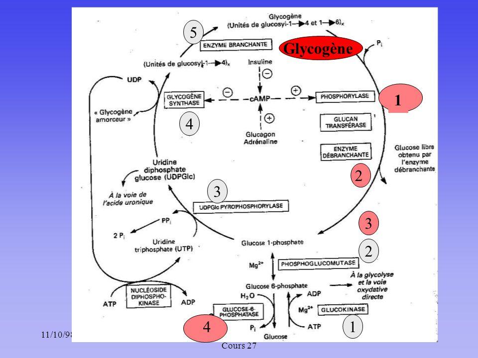 11/10/9812Méta. des glucides : Chapitre 5 ; Cours 27 1 3 2 4 5 3 2 1 Glycogène 3 4