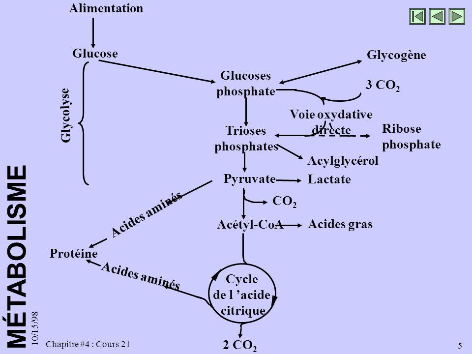 MÉTABOLISME 10/15/98 5 Chapitre #4 : Cours 21 2 CO 2 Alimentation Glucose Glucoses phosphate Glycogène Trioses phosphates Acylglycérol 3 CO 2 Voie oxy