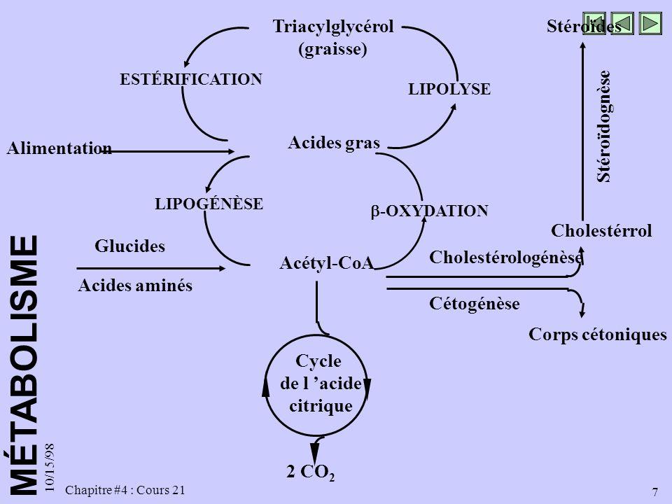 MÉTABOLISME 10/15/98 7 Chapitre #4 : Cours 21 2 CO 2 Acétyl-CoA Corps cétoniques Cétogénèse Acides aminés Glucides Cholestérologénèse Cholestérrol Sté