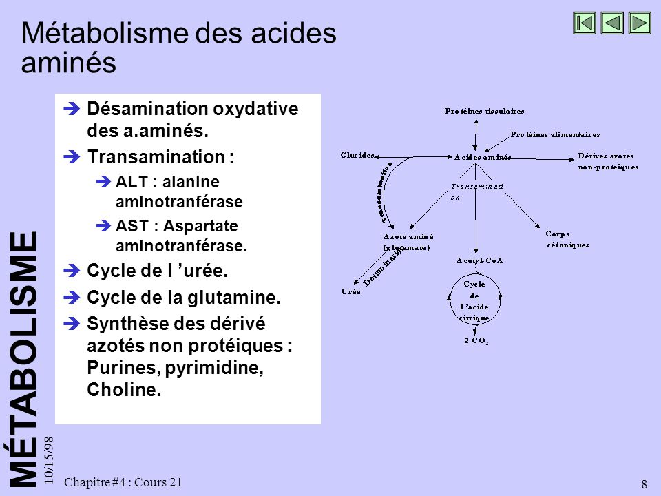 MÉTABOLISME 10/15/98 8 Chapitre #4 : Cours 21 Métabolisme des acides aminés Désamination oxydative des a.aminés. Transamination : ALT : alanine aminot