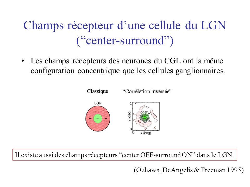 Champs récepteur dune cellule du LGN (center-surround) Les champs récepteurs des neurones du CGL ont la même configuration concentrique que les cellul