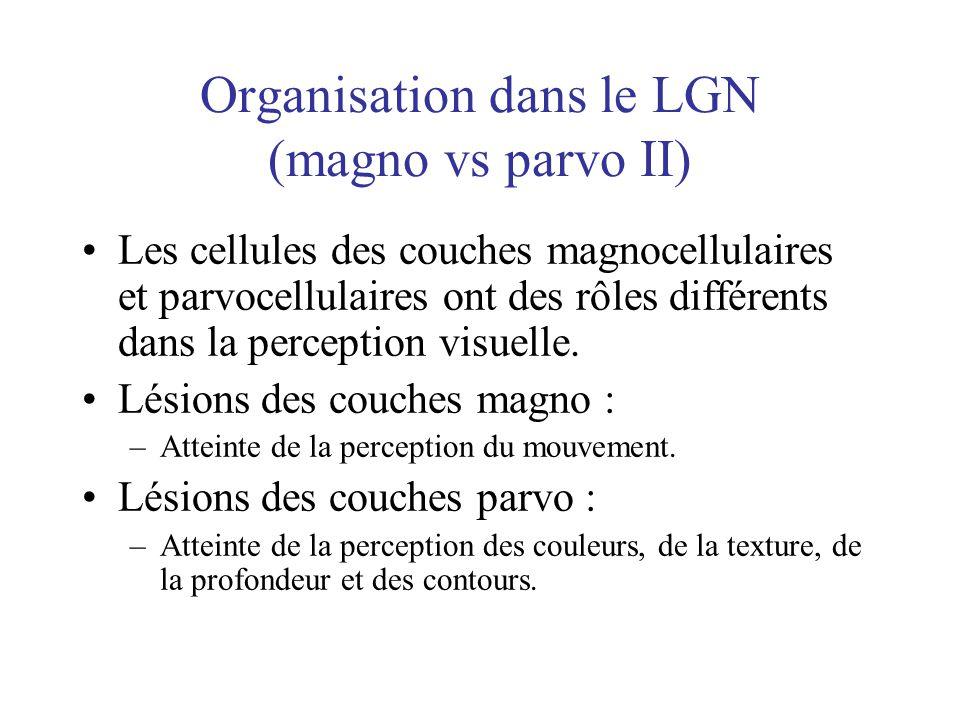 Organisation dans le LGN (magno vs parvo II) Les cellules des couches magnocellulaires et parvocellulaires ont des rôles différents dans la perception