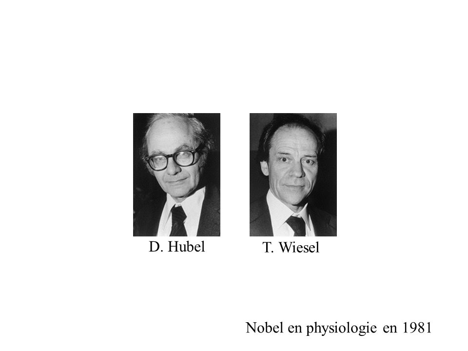 Nobel en physiologie en 1981 D. Hubel T. Wiesel