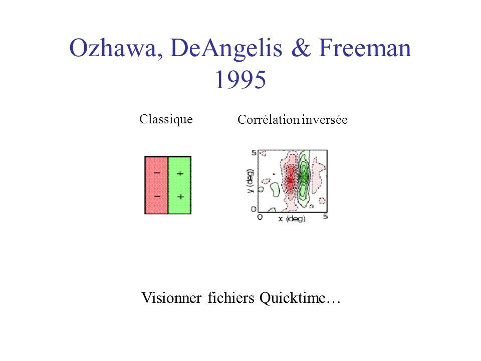 Ozhawa, DeAngelis & Freeman 1995 Classique Corrélation inversée Visionner fichiers Quicktime…