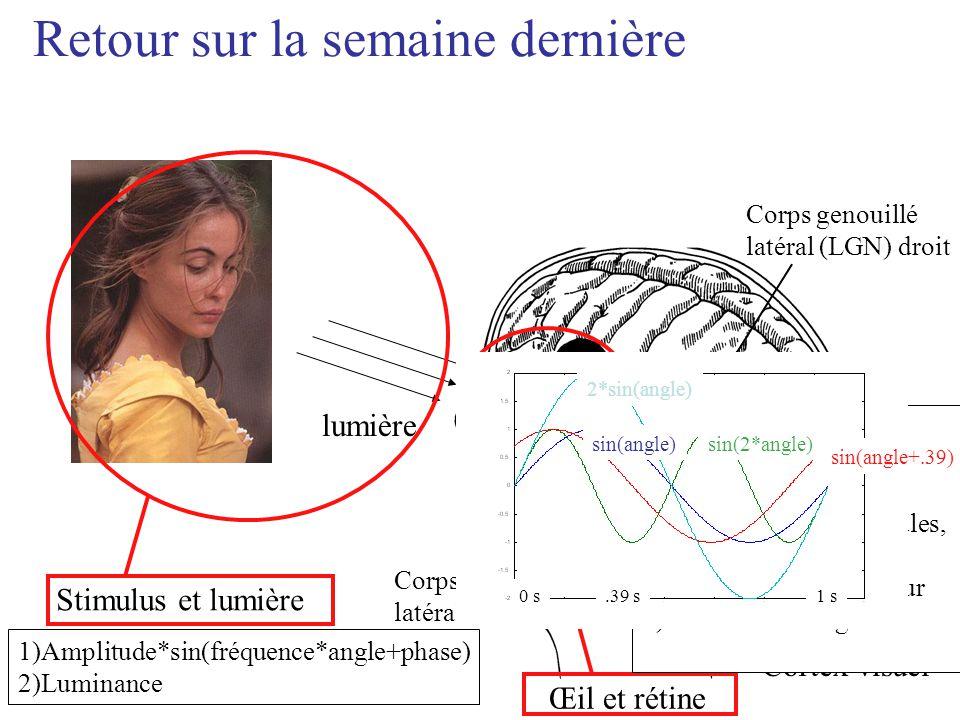 lumière Corps genouillé latéral (LGN) gauche Corps genouillé latéral (LGN) droit Cortex visuel Stimulus et lumière Œil et rétine Retour sur la semaine